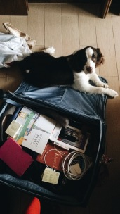 Empacando...