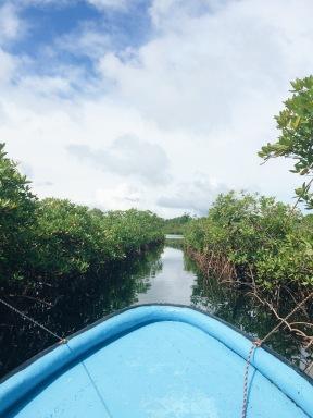 Entre plantas hacia Dolphin Cove