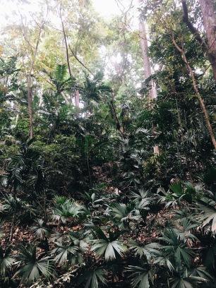 El paisaje verde/Leafy greens