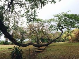 Jungla/Jungle views