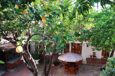 Árboles frutales en le patio/Fruit trees in the patio