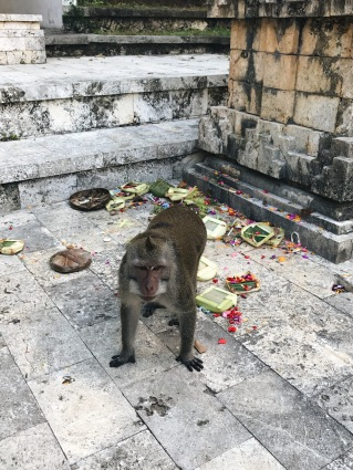 Chango travieso jugando con las ofrendas/Naughty monkey playing with the offerings