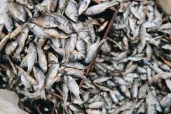Pescaditos frescos